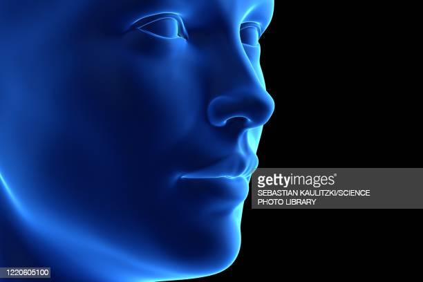 female face, illustration - physiology stock illustrations