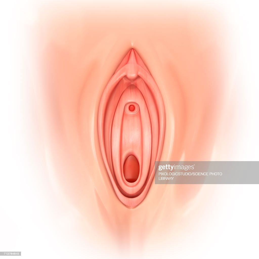 Macro photography vulva