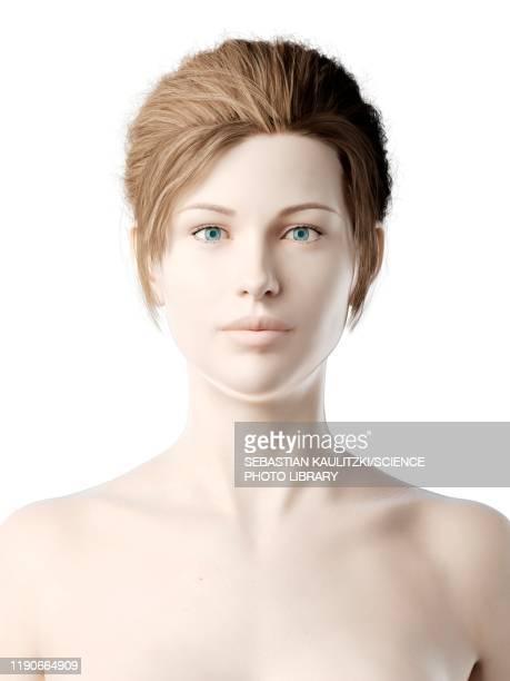female head, illustration - adult stock illustrations
