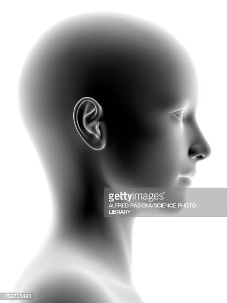 female head, illustration - human representation stock illustrations