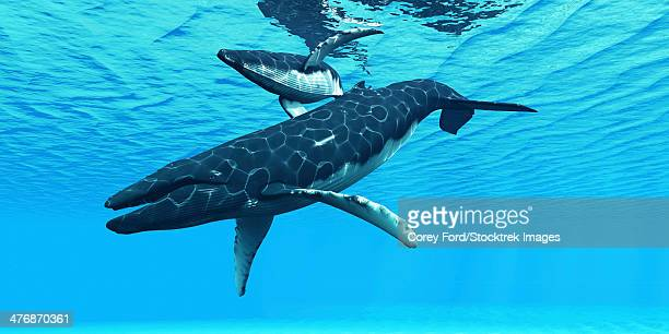 a female humpback whale swims with her calf on their migration route through ocean waters. - humpback whale stock illustrations, clip art, cartoons, & icons