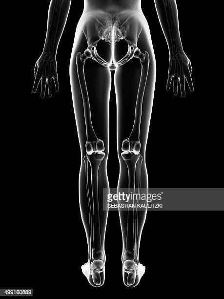 ilustraciones, imágenes clip art, dibujos animados e iconos de stock de female leg bones, artwork - hueso de la pierna