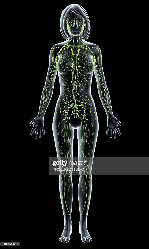 Female Lymphatic System Artwork Stock Illustration | Getty Images