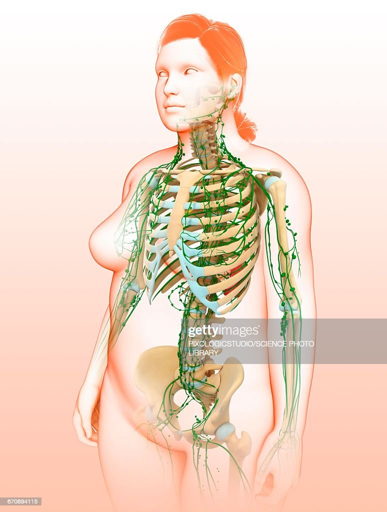 Female Lymphatic System Illustration Stock Illustration | Getty Images