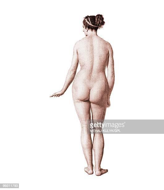 bildbanksillustrationer, clip art samt tecknat material och ikoner med female nude, artwork - naket
