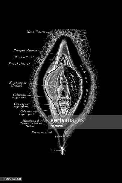 illustrazioni stock, clip art, cartoni animati e icone di tendenza di organo riproduttivo femminile - organo riproduttivo femminile