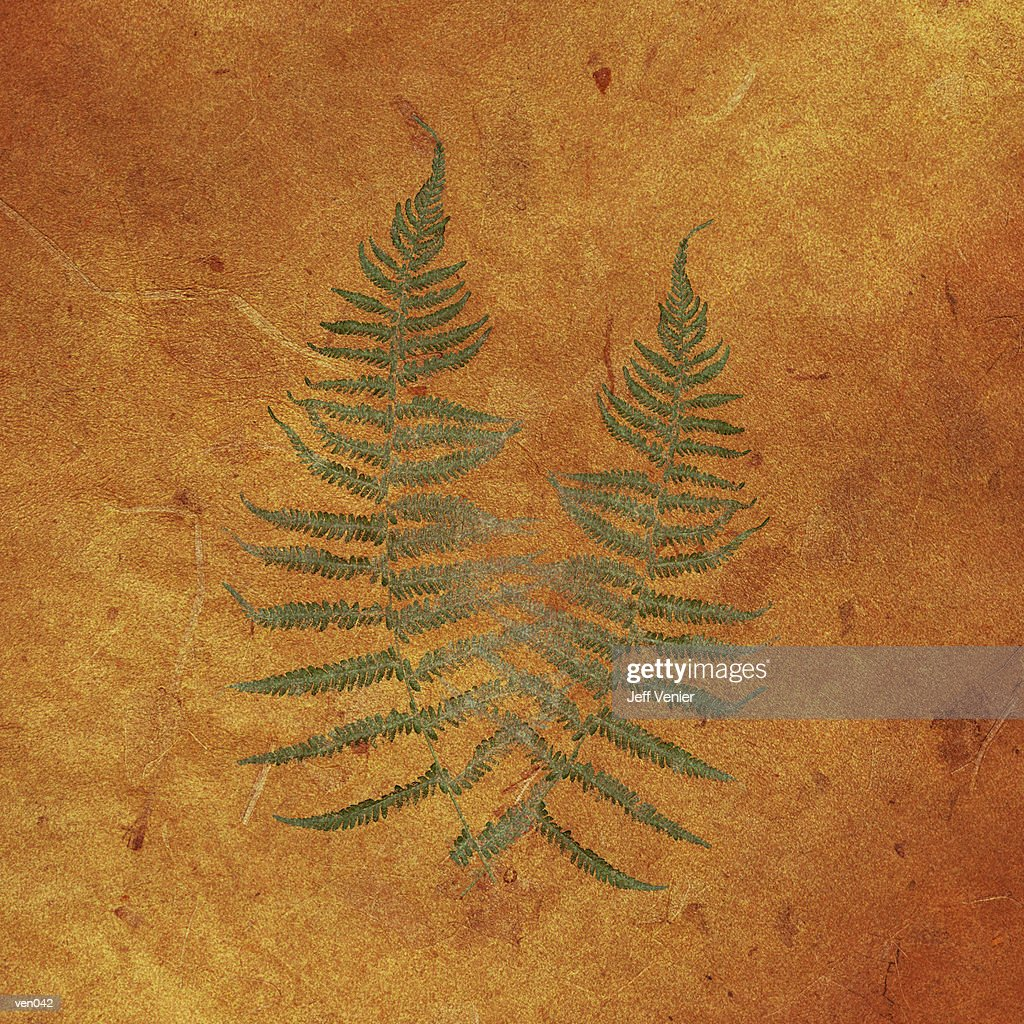 Ferns on Sienna Background : Stockillustraties