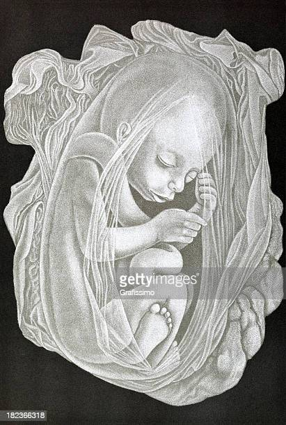 fetus of five months with placenta isolated on black - placenta stock illustrations, clip art, cartoons, & icons