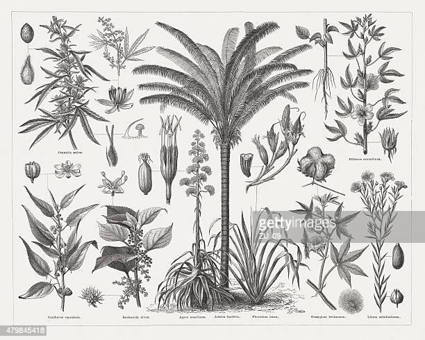 Fiber plants, wood engravings, published in 1878