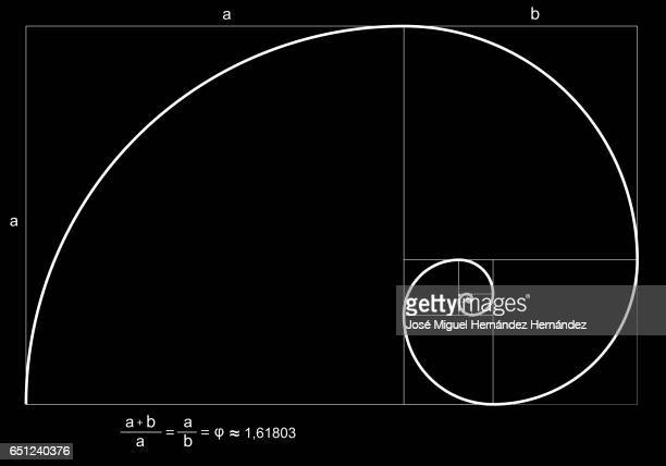 fibonacci spiral or fibonacci succession illustration - ruler stock illustrations