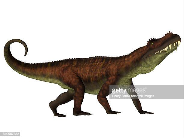 A fierce Prestosuchus dinosaur, side view.