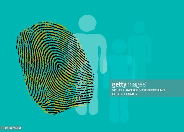 fingerprint, illustration - natural pattern stock illustrations