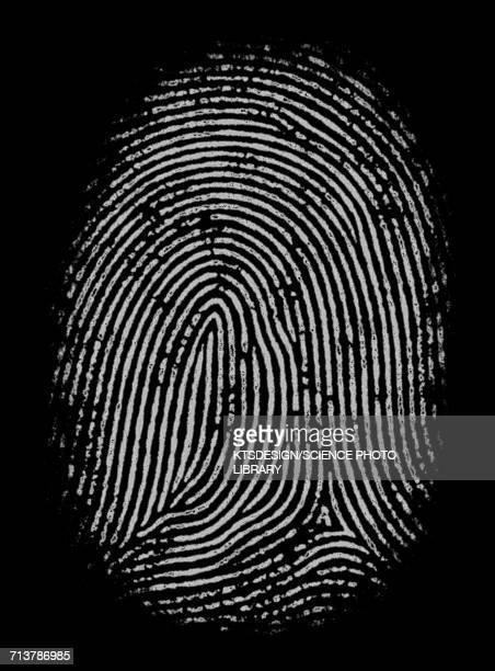 Fingerprint, illustration
