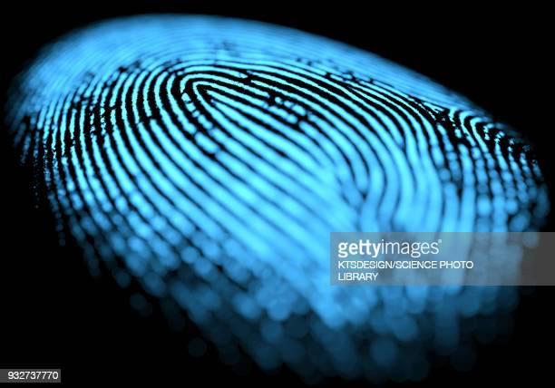 ilustraciones, imágenes clip art, dibujos animados e iconos de stock de fingerprint, illustration - huella dactilar