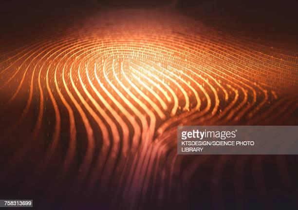 ilustraciones, imágenes clip art, dibujos animados e iconos de stock de fingerprint shape in binary code, illustration - huella dactilar
