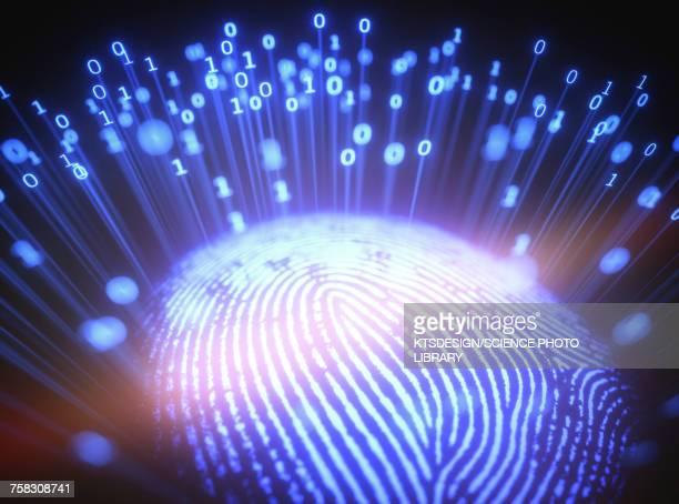 ilustraciones, imágenes clip art, dibujos animados e iconos de stock de fingerprint with binary code, illustration - huella dactilar