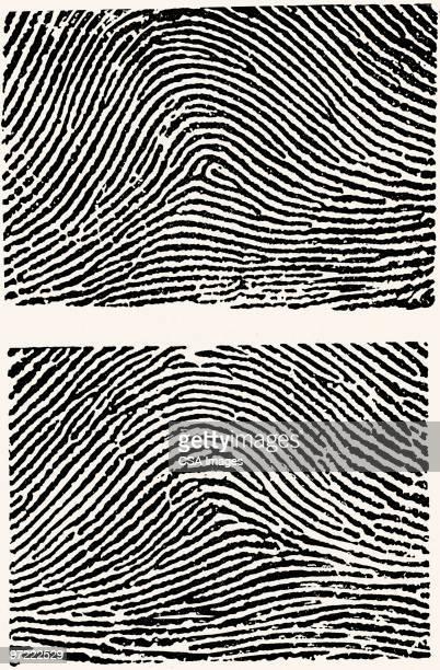 ilustraciones, imágenes clip art, dibujos animados e iconos de stock de fingerprints - huella dactilar