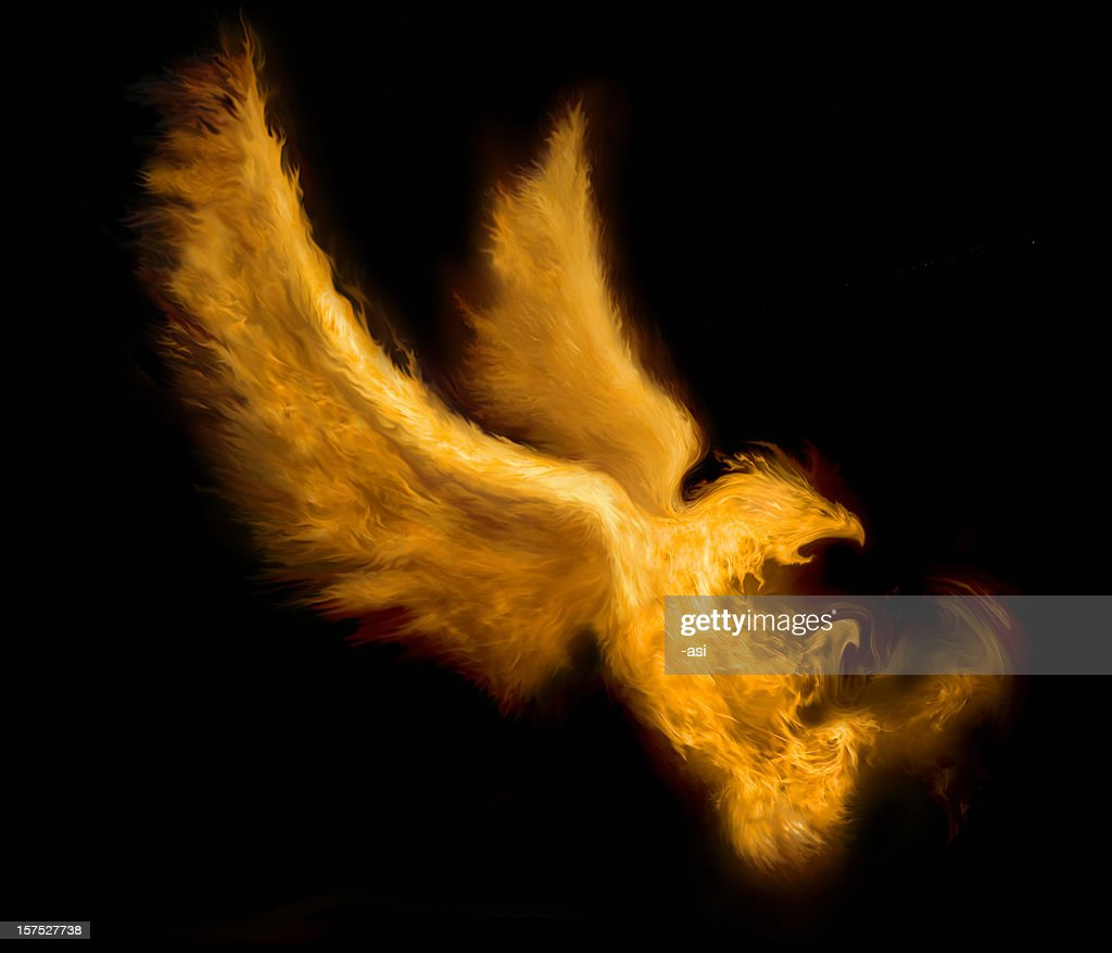 fire bird : stock illustration