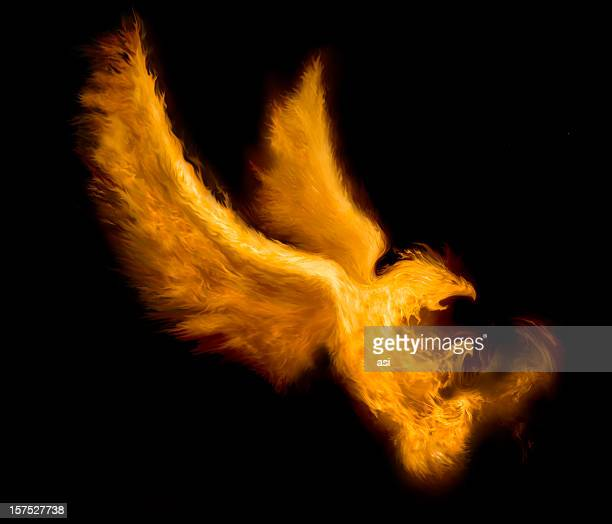 fire bird - fire natural phenomenon stock illustrations, clip art, cartoons, & icons