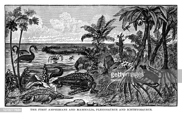 first amphibians and malmalia, plesiosaurus and ichthyosaurus - jurassic stock illustrations, clip art, cartoons, & icons