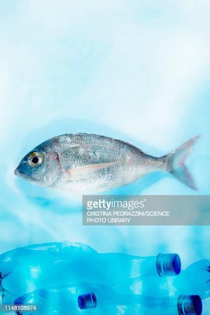 fish and plastic pollution, conceptual image - plastic stock illustrations