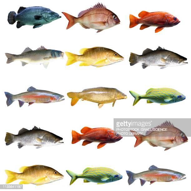 fish chart - living organism stock illustrations