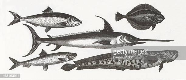 Fish Engraving