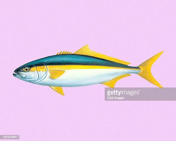 fish - tail fin stock illustrations, clip art, cartoons, & icons