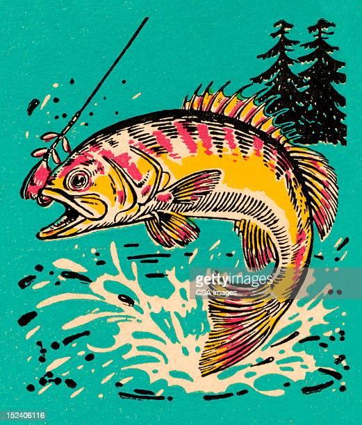 fish - wilderness stock illustrations