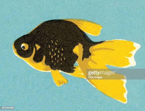 illustrations, cliparts, dessins animés et icônes de fish - poisson rouge
