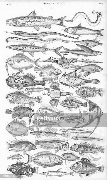 Fish old litho print from 1852