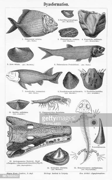 devonian fish fossils
