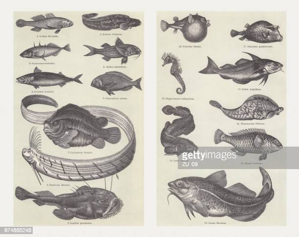 Fish, wood engravings, published in 1897