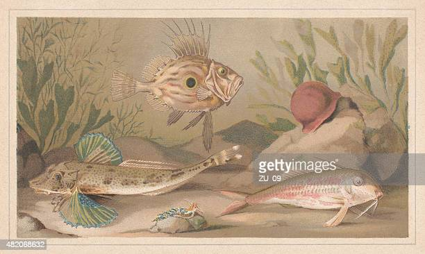 Fishes, lithograph, published in 1868