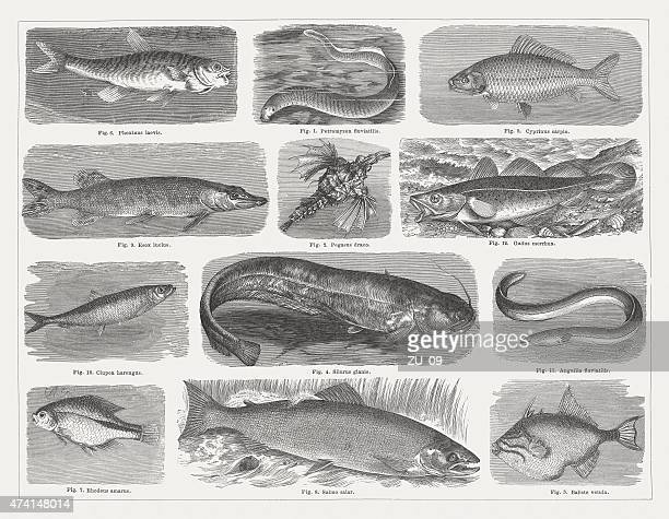 Fishes, wood engravings, published in 1875