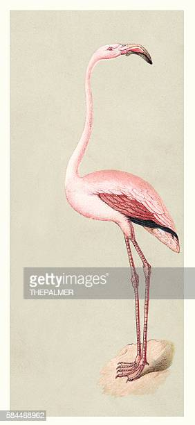flamingo illustration 1888 - flamingo stock illustrations, clip art, cartoons, & icons