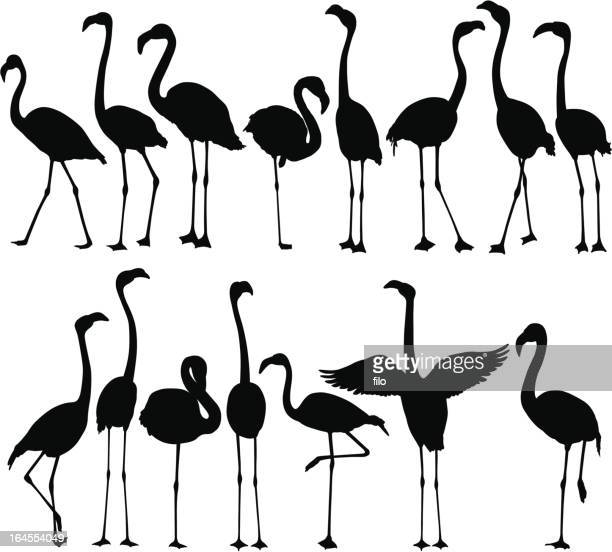 flamingo silhouettes - flamingo stock illustrations, clip art, cartoons, & icons