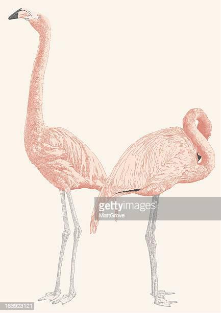 flamingoes - webbed foot stock illustrations, clip art, cartoons, & icons