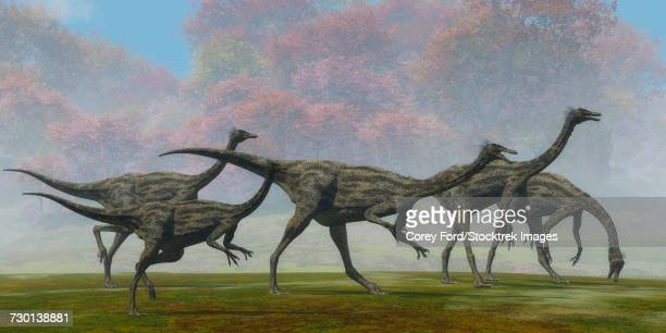 A flock of Gallimimus dinosaur reptiles forage for food.