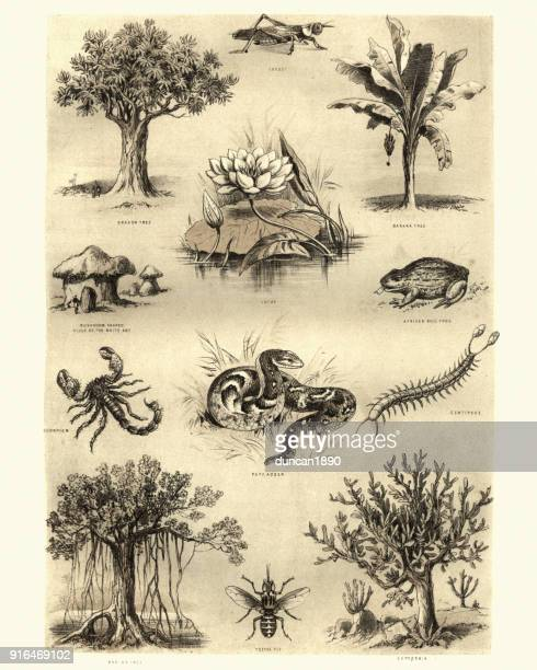 Flora and fauna of africa