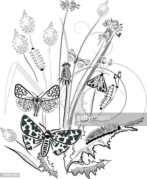 floral composition - plant stage stock illustrations, clip art, cartoons, & icons