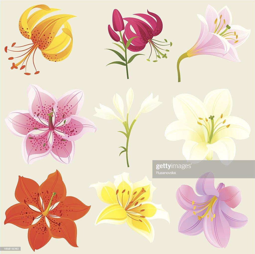 Floral Design Elements (Colourful Lilies)