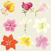 Floral Design Elements (Colourful Lilies)