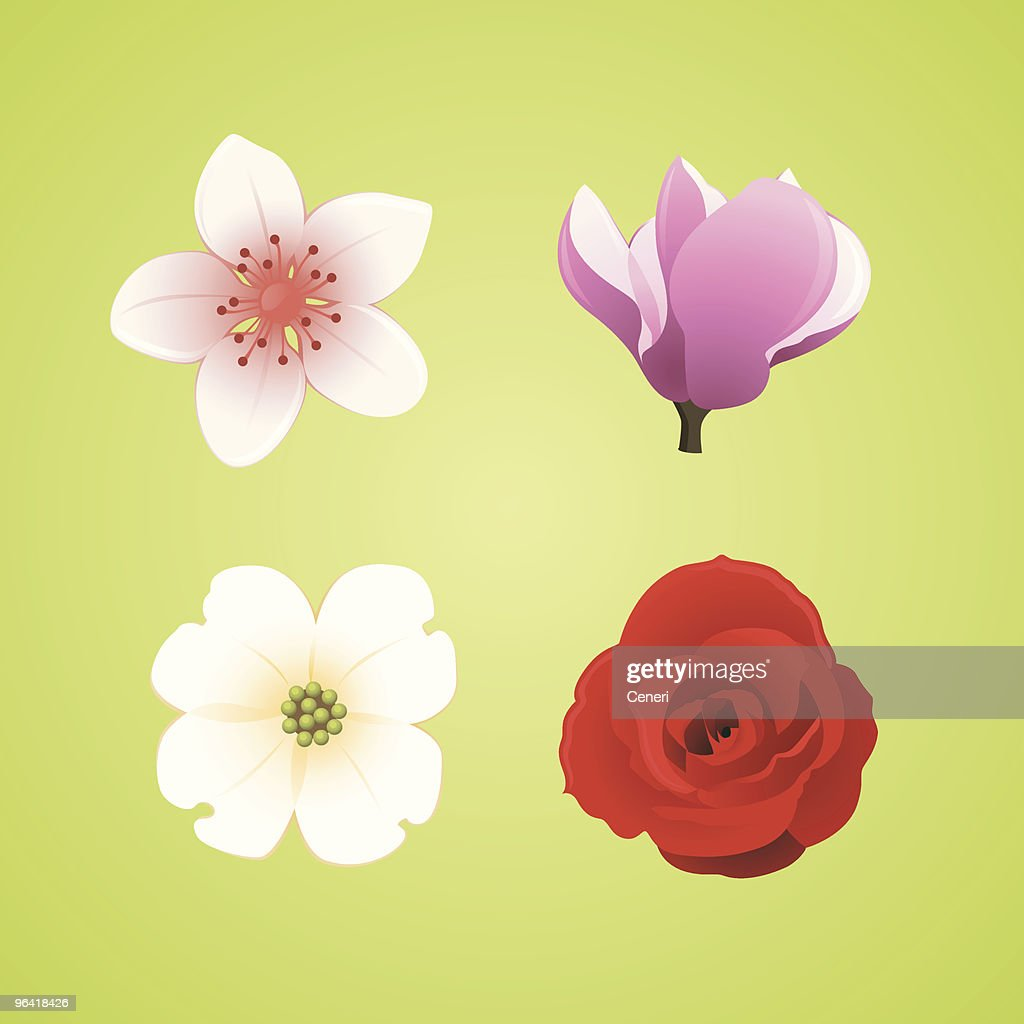 Floral Icons: Cherry Blossom, Magnolia, Dogwood, and Rose