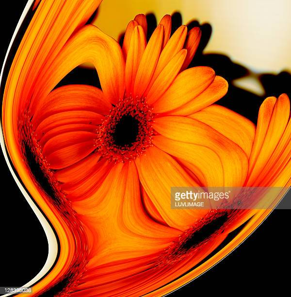 flower composition of daisy - digital enhancement stock illustrations