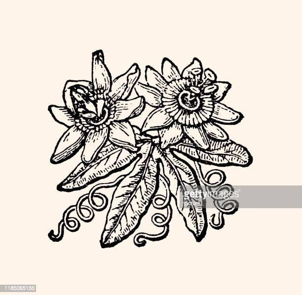 花 (xxxl) - 1890~1899年点のイラスト素材/クリップアート素材/マンガ素材/アイコン素材