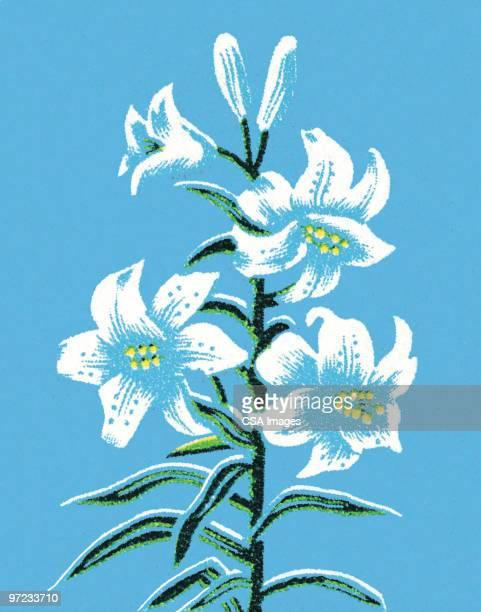 flowers - vertical stock illustrations