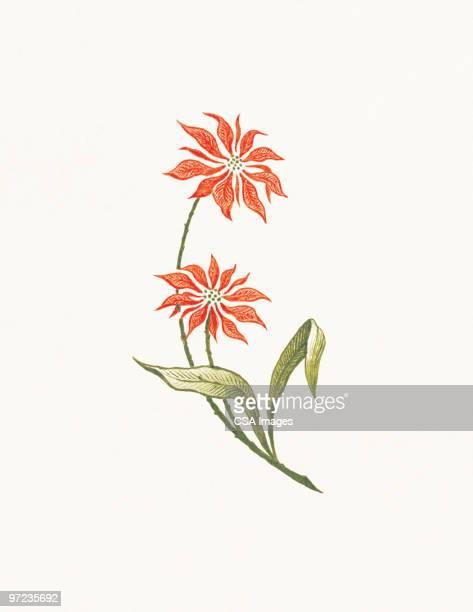 ilustraciones, imágenes clip art, dibujos animados e iconos de stock de flowers - flor de pascua
