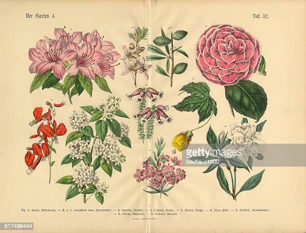 Flowers of the Garden, Victorian Botanical Illustration