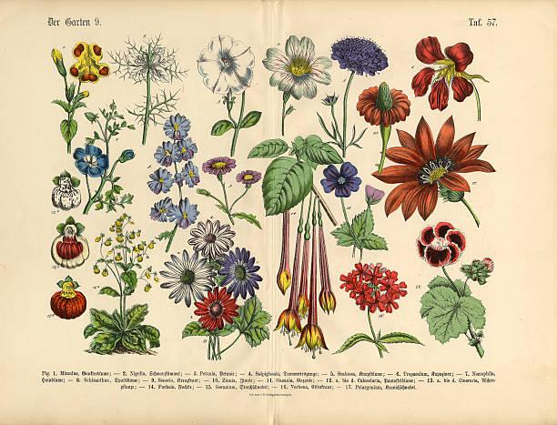 Flowers Of The Garden, Victorian Botanical Illustration Wall Art